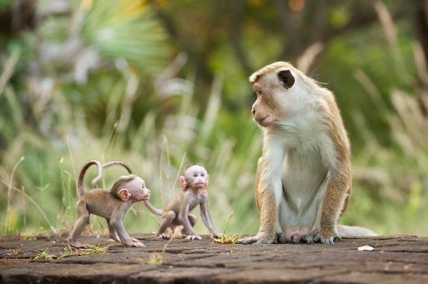 Người sinh năm 1992 Nhâm Thân mang mệnh Kim, là tuổi con Khỉ